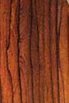 Madagascar_rosewood